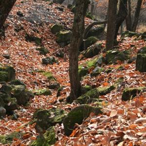 Природа Приморья